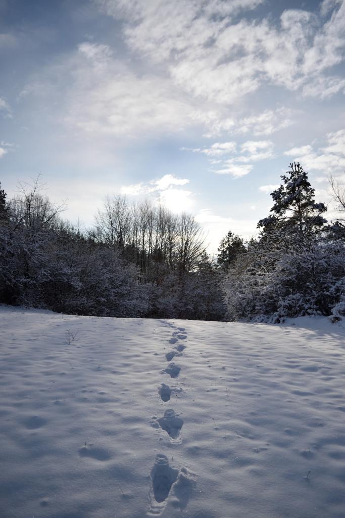 Impressionen Kalte weißblaue Jahreszeit